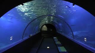 水中トンネル (串本海中公園 水族館) 2018年12月27日