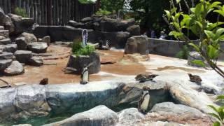 フルルとフンボルトペンギン (東武動物公園) 2017年6月11日
