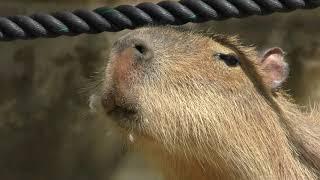 リスザルの楽園 (東武動物公園) 2018年5月6日