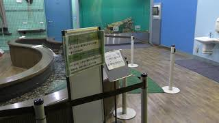 8 ふれあい体験室 (琵琶湖博物館 水族展示室) 2019年10月30日