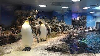 ペンギン村・亜南極に生きるペンギン「陸上編」 (市立しものせき水族館 海響館) 2019年4月26日