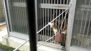 シロテテナガザル に餌やり体験 (福知山市動物園) 2019年3月29日