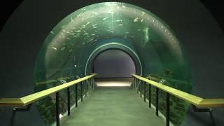 1-2 沖合にすむ生き物たち (琵琶湖博物館 水族展示室) 2019年10月30日