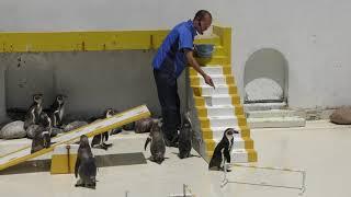 夏季限定「ペンギンショー」 (おたる水族館) 2019年6月14日