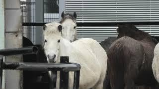 第1放牧場 (野間馬ハイランド) 2019年12月26日