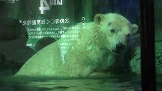 元気に泳ぐ ホッキョクグマ の『ユキ丸』 (八景島シーパラダイス) 2018年7月14日