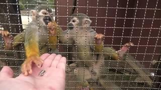 南米の森ミニツアー「コモンリスザル」 (みさき公園) 2020年1月19日