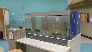 ディスカバリールーム のぞいてみよう 魚の世界 (琵琶湖博物館) 2019年10月30日