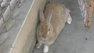 Rabbit (Manriki Park Manyo-no Mori Zoo, Yamanashi, Japan) September 23, 2018