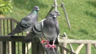 野鳥たち (沖縄こどもの国) 2019年5月13日