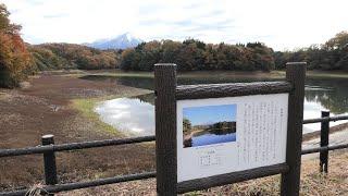 マガモ (鳥取県米子市) 2019年11月29日