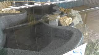 世界の大蛇 (おきなわワールド・ハブ博物公園) 2019年5月13日