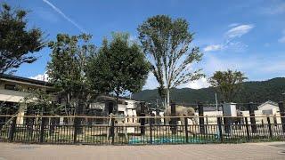 ゾウの森 (京都市動物園) 2020年9月1日