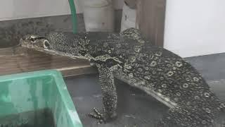 爬虫類ハウス (阿蘇カドリー・ドミニオン) 2019年12月7日