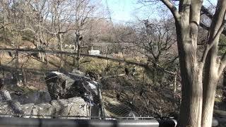 猛禽舎 (多摩動物公園) 2019年1月18日