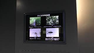 水生昆虫 (さいたま水族館) 2018年12月9日
