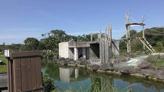 チンパンジーの島 (伊豆シャボテン動物公園) 2019年10月1日