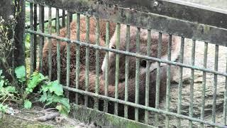ユーラシアカワウソ (宮崎市フェニックス自然動物園) 2019年12月9日