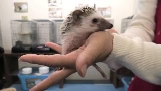 Hedgehog (Living things Rapport School, Ehime, Japan) December 24, 2019