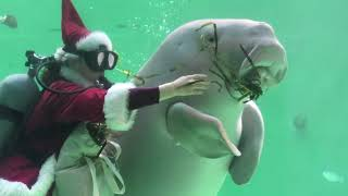 Christmas gifts for Dugong (TOBA AQUARIUM, Mie, Japan) December 25, 2020