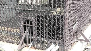 ツキノワグマ の『わっこ』 (河北町児童動物園) 2019年8月5日