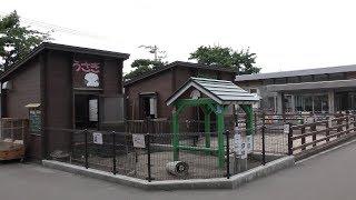 Rabbit (Hakodate Park, Hokkaido, Japan) August 9, 2019