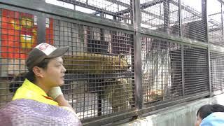 ライオンのガイド (宇都宮動物園) 2018年4月30日