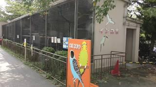 インコ舎 (王子動物園) 2018年9月16日