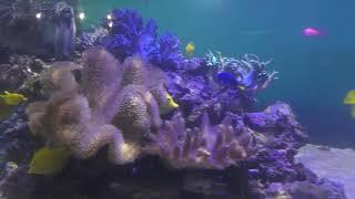 サンゴ水槽 (八景島シーパラダイス) 2018年1月7日