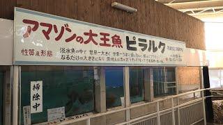 熱帯魚館 1 (べっぷ地獄めぐり 白池地獄) 2019年12月4日
