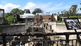 アカゲザル山 (京都市動物園) 2020年9月1日