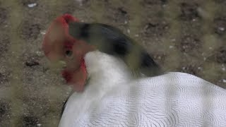 ハッカン (千葉市動物公園) 2020年9月17日