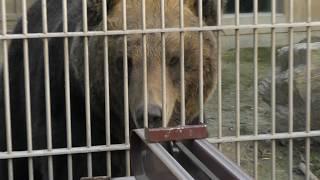 「ヒグマの森」トイベア (東武動物公園) 2018年3月31日