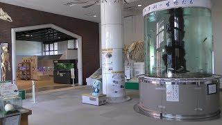 動物資料館 (熊本市動植物園) 2019年4月18日