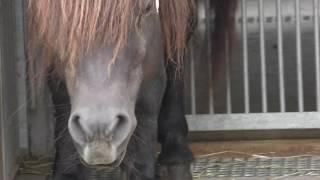 トカラウマ の『コタロウ』と『カケル』 (平川動物公園) 2018年7月29日