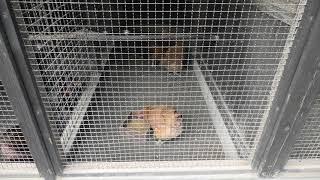 地鶏舎 (宮崎市フェニックス自然動物園) 2019年12月9日