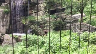 オオワシ (多摩動物公園) 2017年8月27日