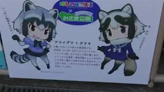 アライグマとタヌキ (みさき公園) 2017年11月4日