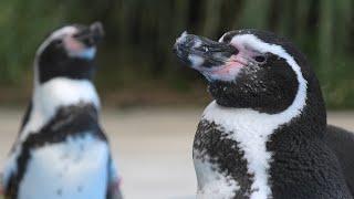 ペンギンヒルズ (埼玉県こども動物自然公園) 2020年9月15日