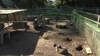 ウサギ と ヤクシマヤギ (宝登山 小動物公園) 2019年10月2日