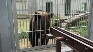 ヒグマ の『アヤメ』 (東武動物公園) 2020年9月18日