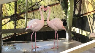 Aviary (NANREKU Children's Zoo, Ehime, Japan) December 23, 2019