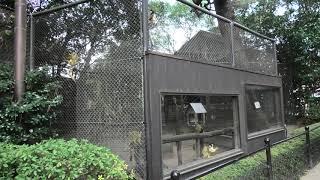 ボリビアリスザル (宮崎市フェニックス自然動物園) 2019年12月9日