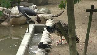 水禽舎 (王子動物園) 2018年9月16日
