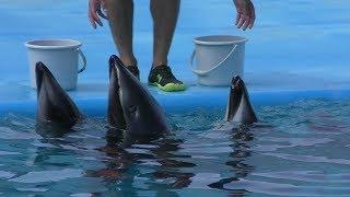 イルカプール (のとじま水族館) 2019年8月17日
