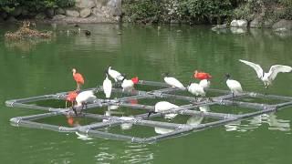 フライングメガドーム (日本平動物園) 2018年8月5日