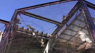 フクロウ (仙台市八木山動物公園/セルコホーム ズーパラダイス八木山) 2018年1月20日
