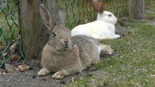 ウサギ (稚内市動物ふれあいランド) 2019年6月23日