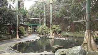 フライングケージ (姫路セントラルパーク) 2019年10月23日