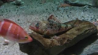 深海に暮らす生物たち (名古屋港水族館) 2017年11月18日
